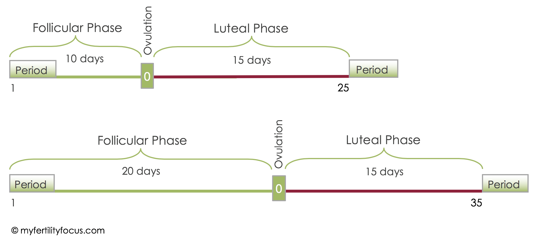 Diagram of menstrual cycle variation
